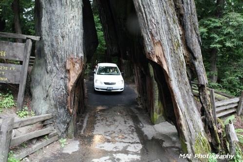 Redwoods.