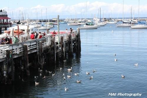 Monterey.