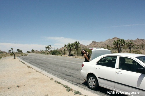 Joshua Tree National Park.